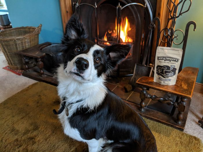 black and white border collie dog witting by a fireplace with a packet of dog food behind it